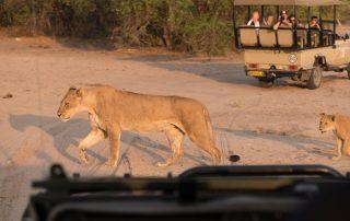 Chobe National Park - safari per 4x4