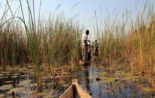 Okavangodelta - mokoro