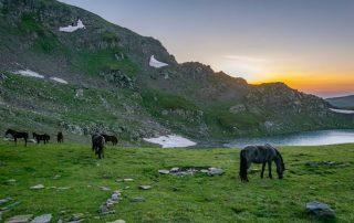 Bulgarije - Paarden aan de oever van het Rila meer