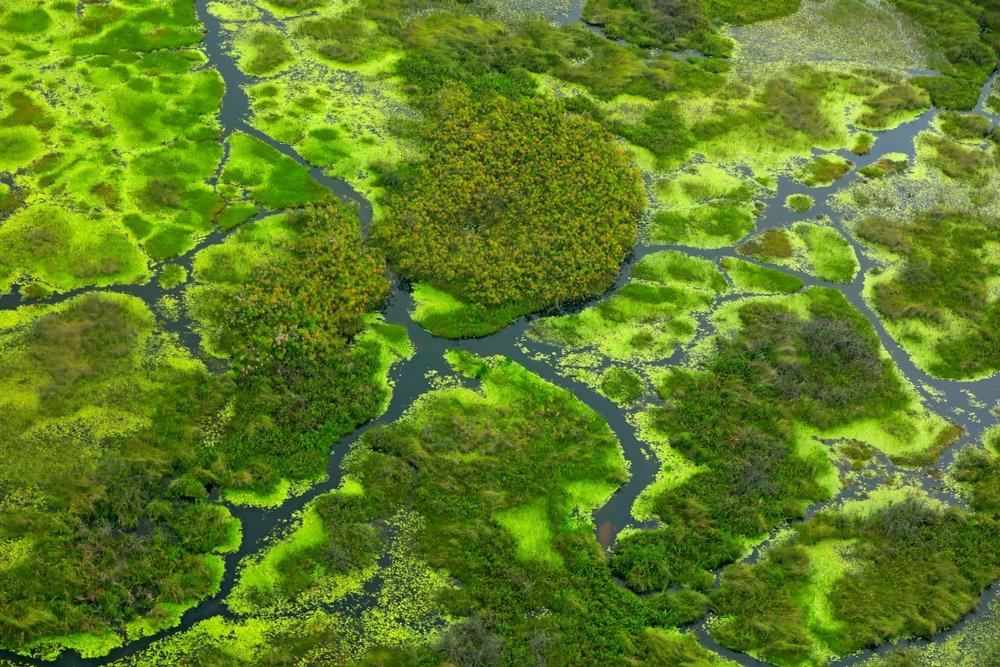 Rondreis Botswana - Veelzijdige natuurpracht - Okavangodelta
