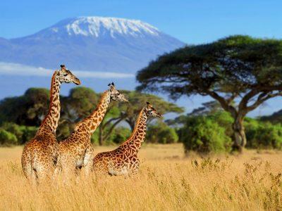 Rondreis Kenia - Safari en strand