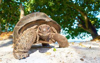 Seychellen - schildpad