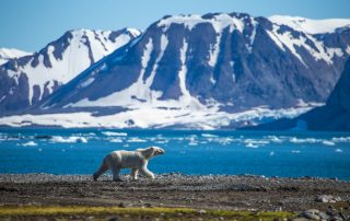 Expeditiecruises - Spitsbergen - ijsbeer