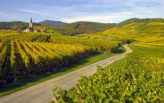 Herbronnen in de Elzas - wijngaarden in de Elzas
