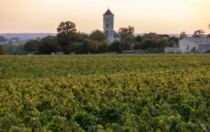 Rondreis Zuid-Frankrijk – La douce France - wijngaard in de buurt van Saint Emilion