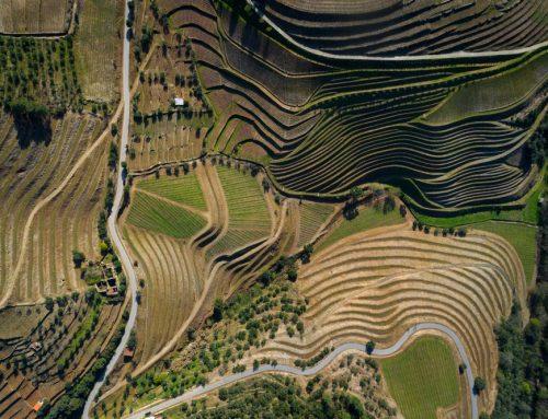 Rondreis Portugal door de mooiste wijnstreken