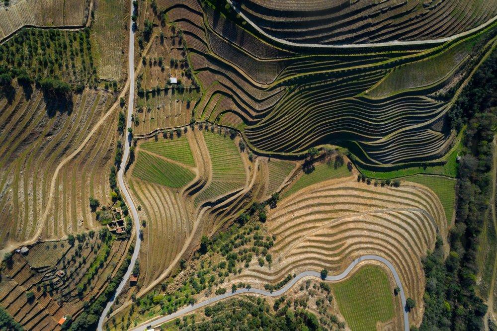 Rondreis Portugal door de mooiste wijnstreken - wijngaarden in de Dourvallei