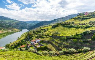 landschap van de regio Douro - wijngaarden