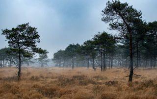 Mist over de Kalmthoutse Heide